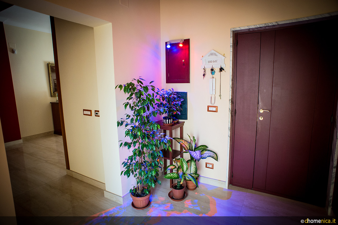 Come illuminare le piante in mancanza di luce solare il blog di - Luce per piante in casa ...